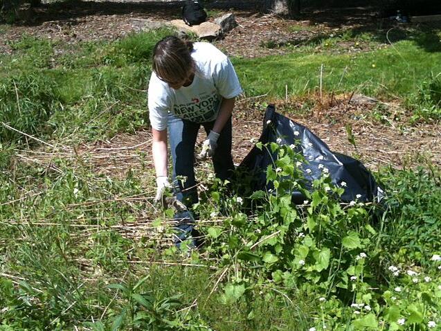 OnSIP team member bagging some brush